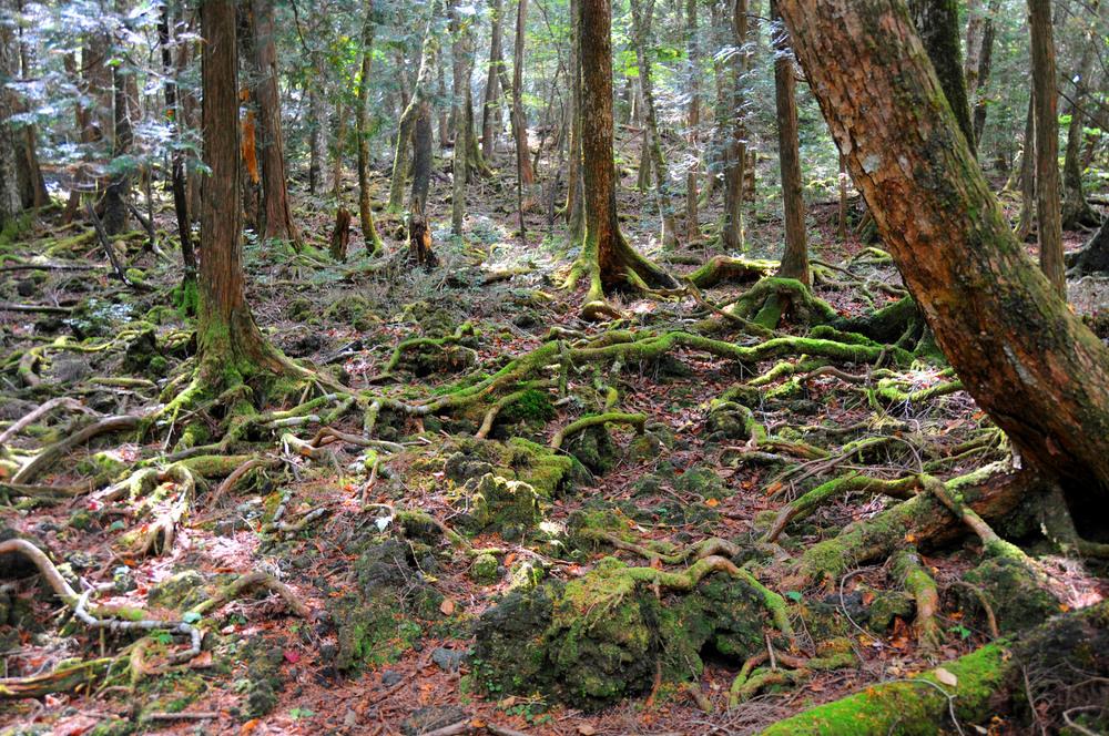 details-on-david-goyers-supernatural-thriller-the-forest