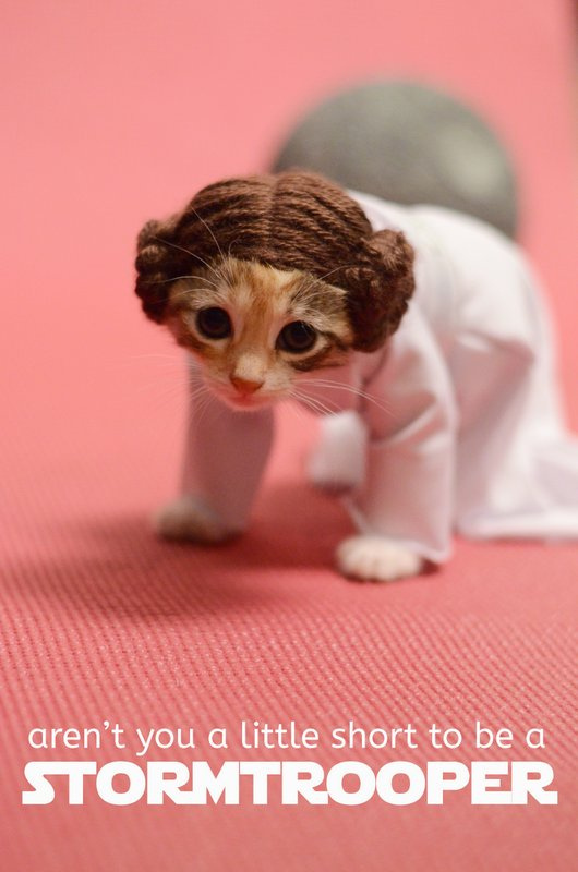 princess-leia-kitty-cosplay