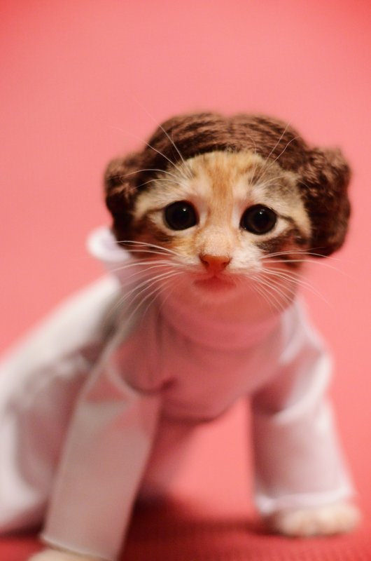 princess-leia-kitty-cosplay2
