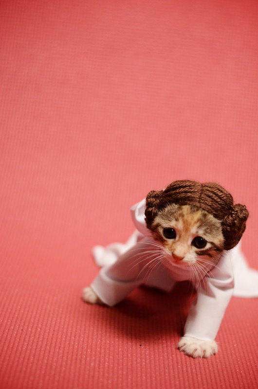 princess-leia-kitty-cosplay3