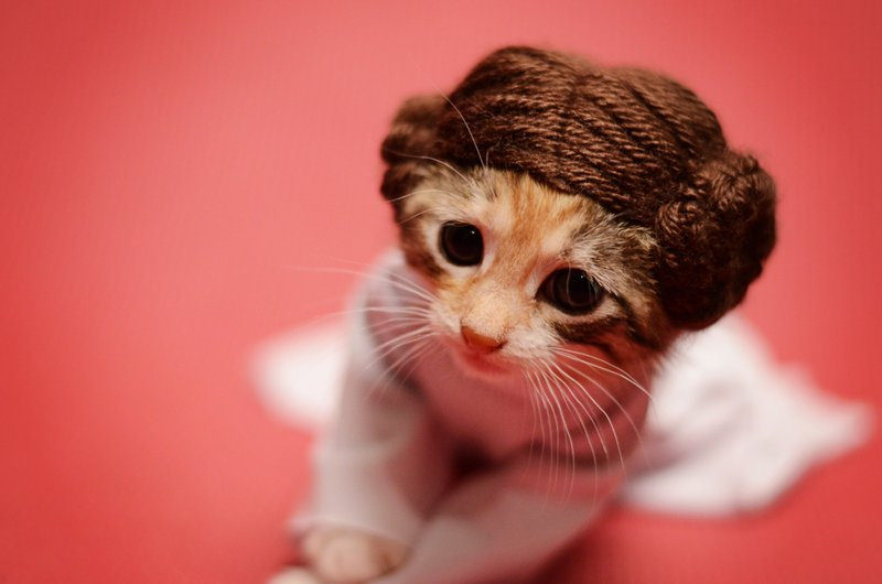 princess-leia-kitty-cosplay4