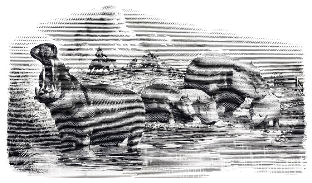 edward-norton-and-brett-ratner-to-develop-american-hippopotamus