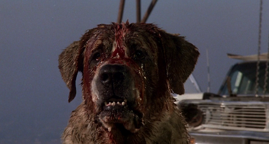 936full-cujo-screenshot.png