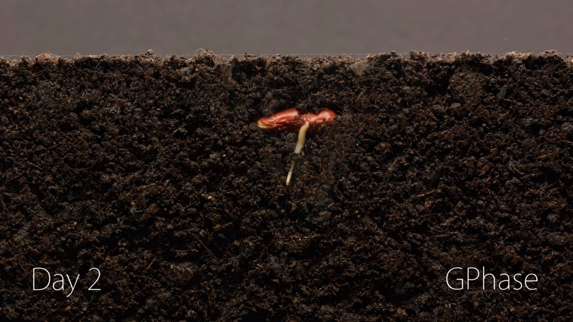 time lapse of a bean growing will make you realize nature is amazing