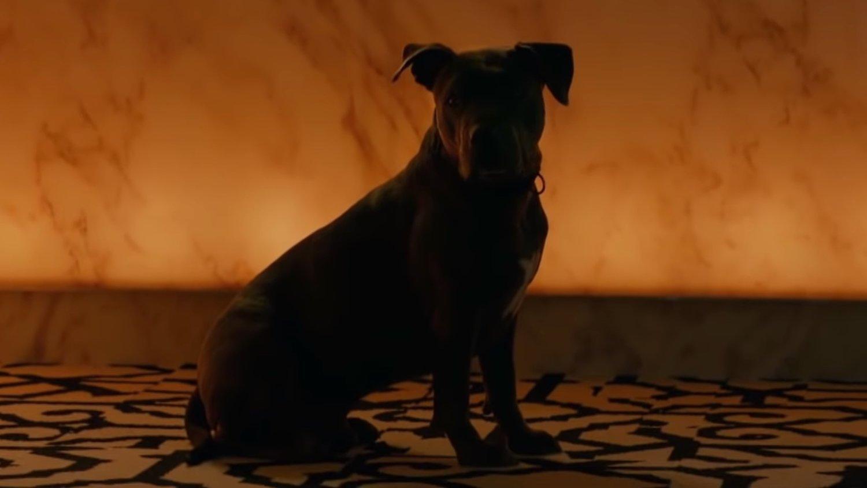 Le nouveau trailer de JOHN WICK: CHAPITRE 3 célèbre la Journée nationale des chiots new john wick chapter 3 trailer celebrates international puppy day a tale of two strays social