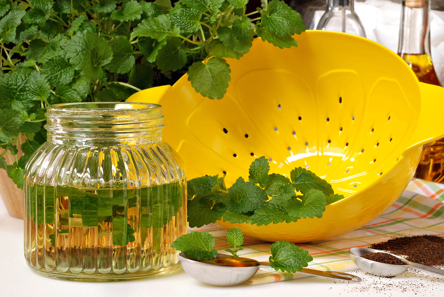 bigstock-Fresh-lemon-balm-herb-Melissa-28634759.jpg