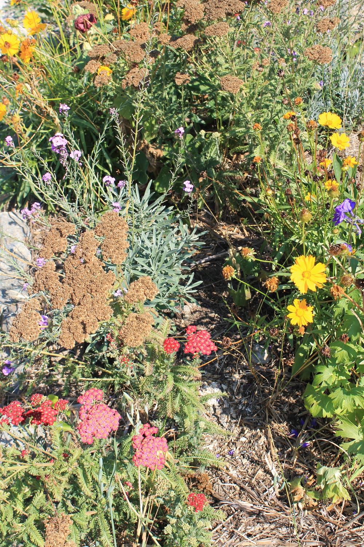 Garden after six months