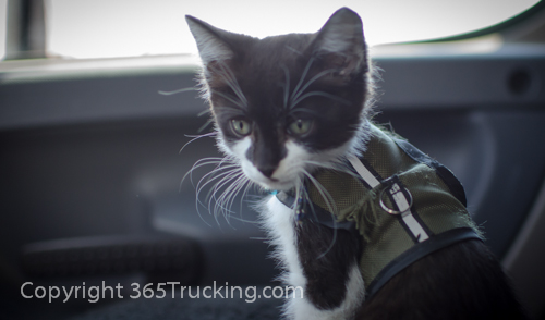 Pet_Transport_Zorro_Pauly_060614-69.jpg