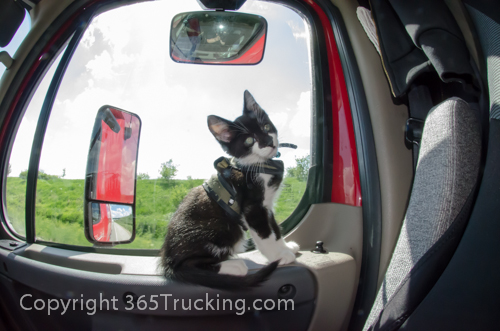 Pet_Transport_Zorro_Pauly_060614-90.jpg