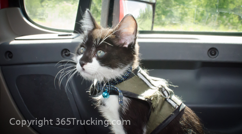 Pet_Transport_Zorro_Pauly_060614-103.jpg