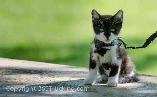 Pet_Transport_Zorro_Pauly_060614-249.jpg