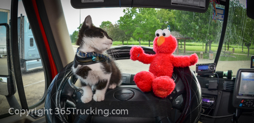 Pet_Transport_Zorro_Pauly_060614-357.jpg