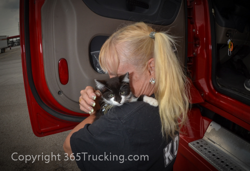 Pet_Transport_Zorro_Pauly_060614-378.jpg