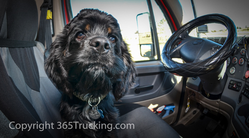 Click pictures to view all Pet Transport images