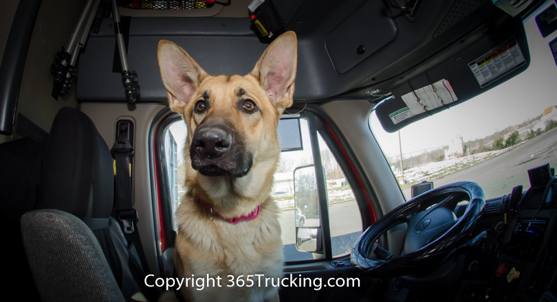 Pet_Transport_112814-167.jpg