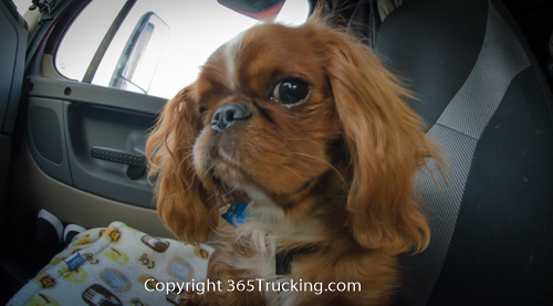 Pet_Transport_101114_Charlie-41.jpg
