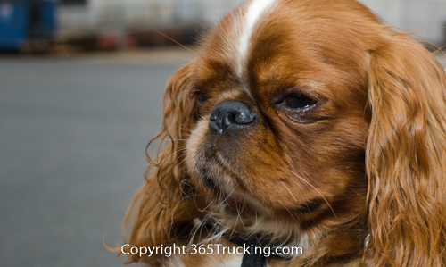 Pet_Transport_101114_Charlie-12.jpg