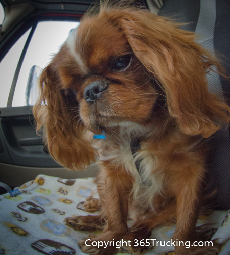 Pet_Transport_101114_Charlie-46.jpg