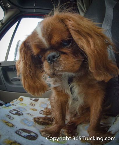Pet_Transport_101114_Charlie-47.jpg