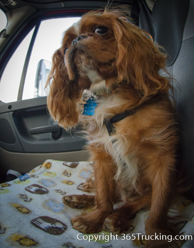 Pet_Transport_101114_Charlie-49.jpg