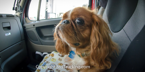 Pet_Transport_101114_Charlie-36.jpg
