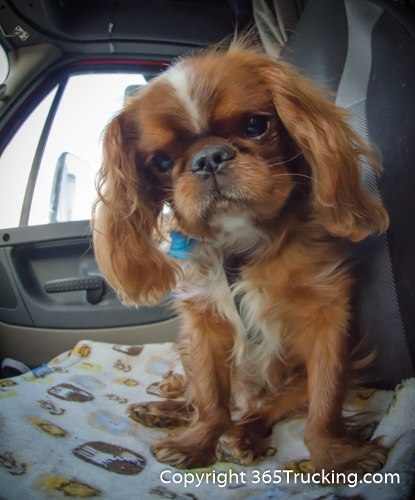 Pet_Transport_101114_Charlie-45.jpg