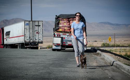 Pet_Transport_Whisper_080114-35.jpg