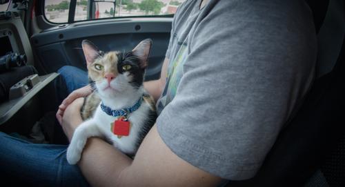 Pet_Transport_Kit_Kat_083114-16.jpg