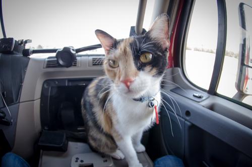 Pet_Transport_Kit_Kat_083114-21.jpg