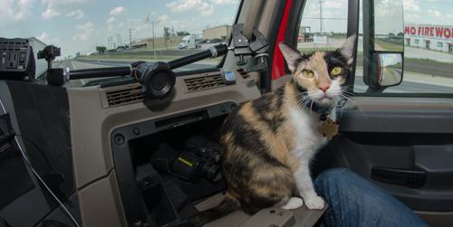 Pet_Transport_Kit_Kat_083114-32.jpg