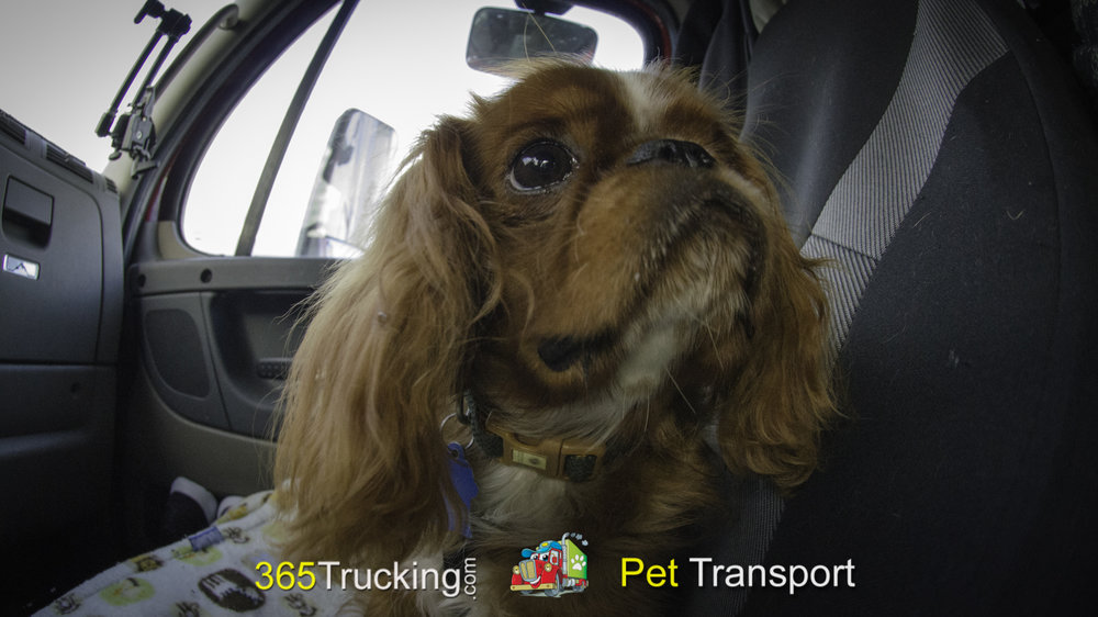 Pet_Transport_101114_Charlie-32.jpg