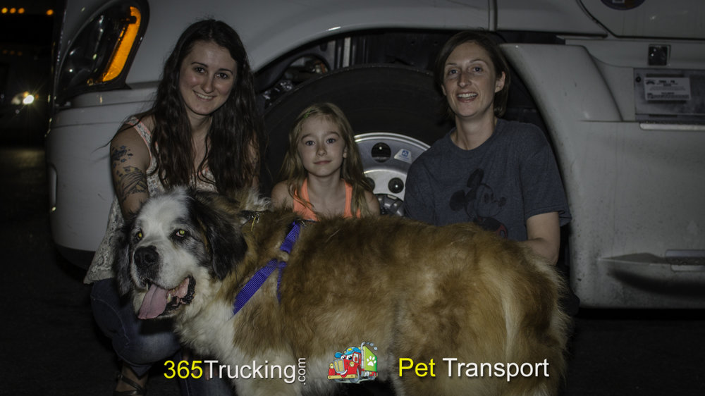 Pet_Transport_Bruno_051414-6.jpg