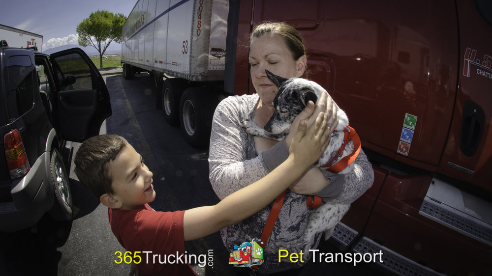 Pet_Transport_BeBe_052614-30.jpg