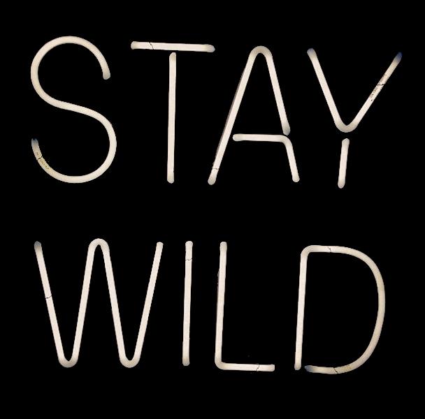 stay wild endeavor neon.jpg