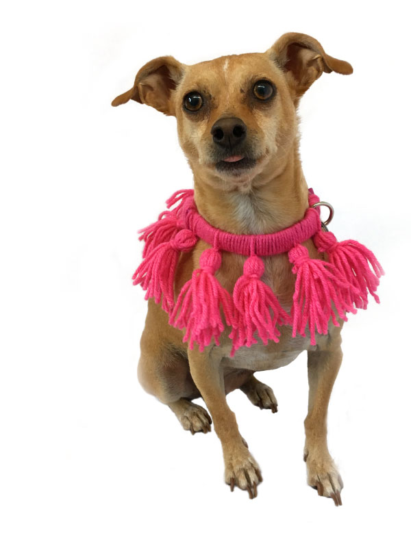 diy-tassel-dog-collar-costume.jpg