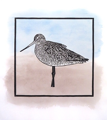 This is a marbled godwit, one of three shorebirds that will be up in my online store very soon.