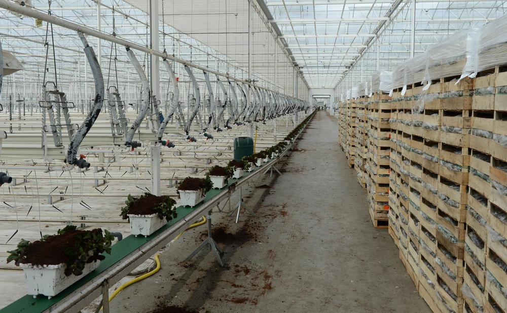 Irrigation system inside the glass greenhouses