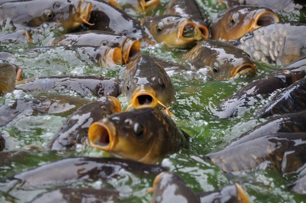 fish-friendly-tideflex-valve