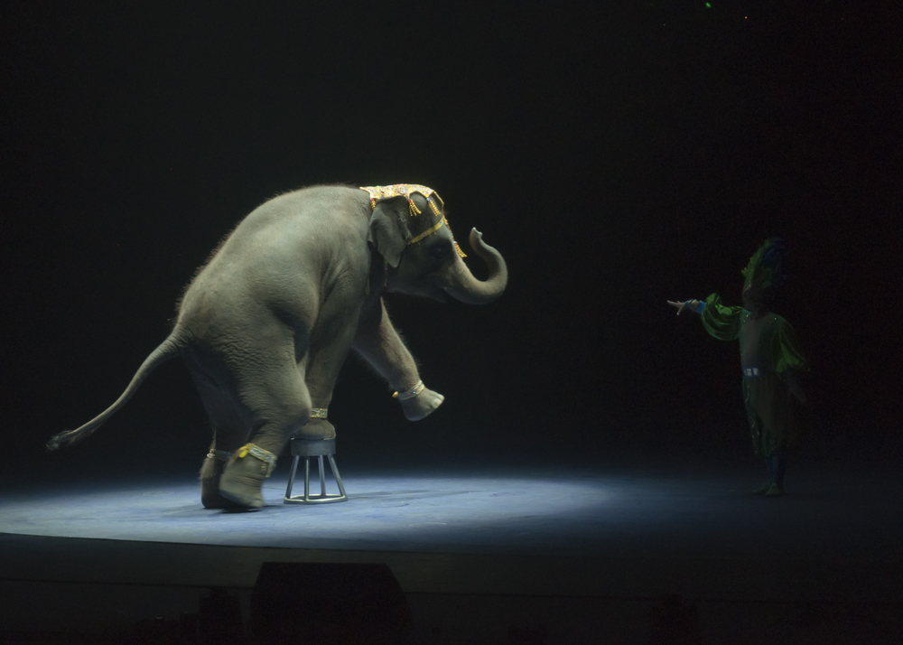 Ellephant balance at Chimelong International Circus, Guangzhou