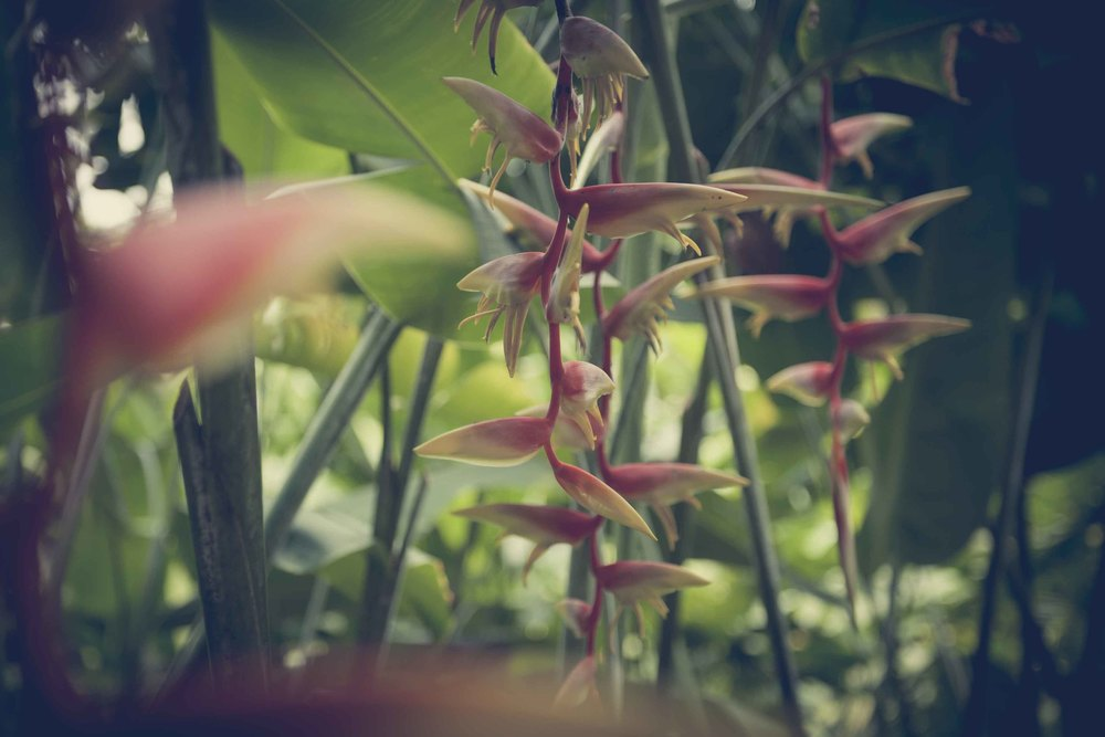 Jamie Lowe Photography Singapore Botanic Garden July 2015