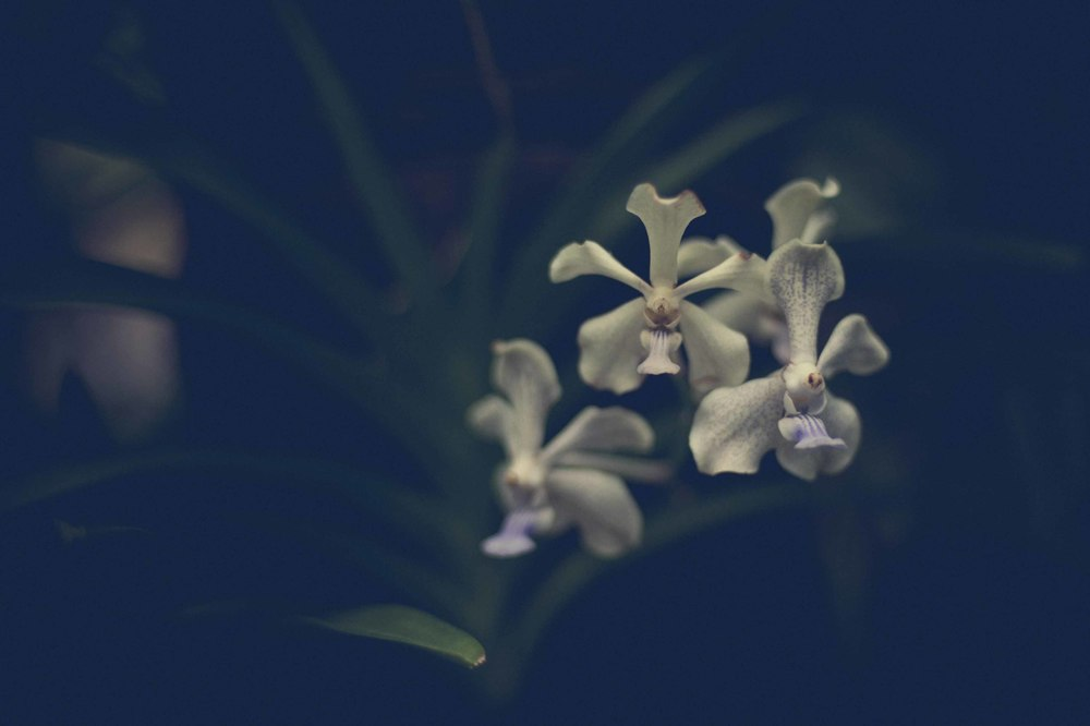 Jamie Lowe Photography Singapore Botanic Garden July 2015_13.jpg