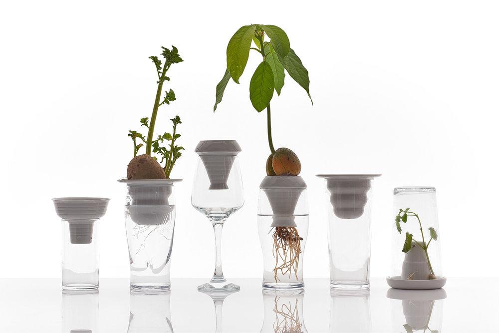 PLANTATION by Alicja Patanowska