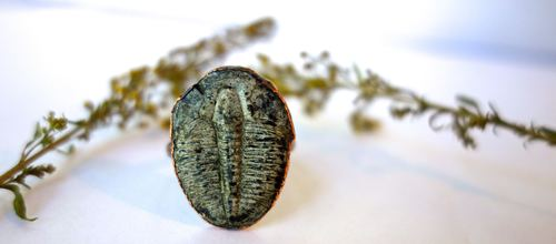 Trilobite Ring Artsy by Janeane Bowlware