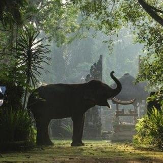 Bali 4.jpg