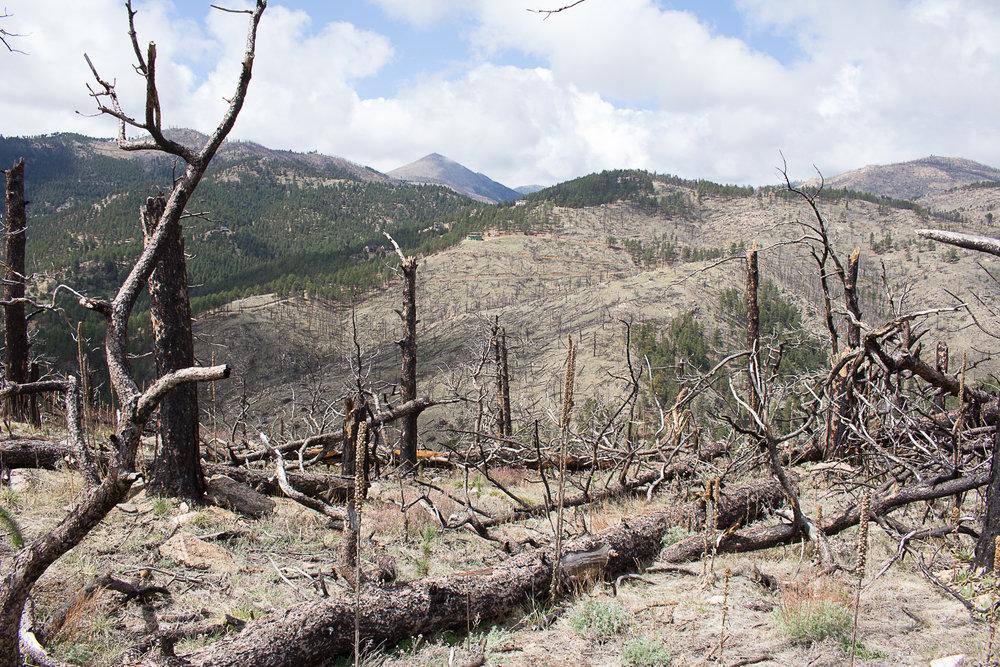 Deforestation Colorado 2.jpg
