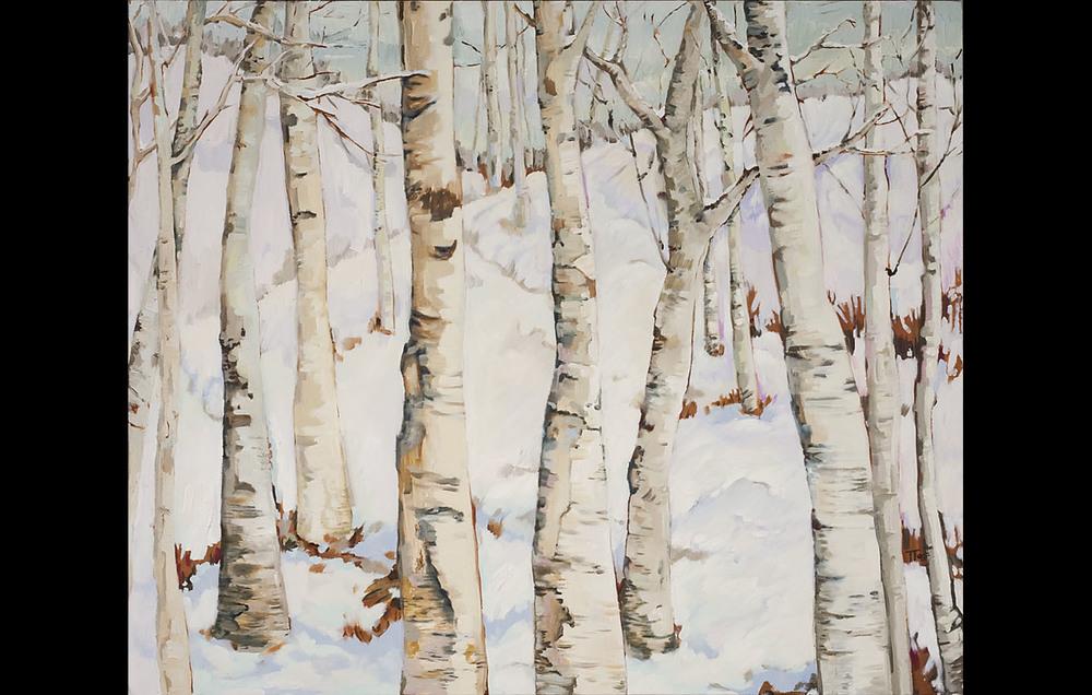 Birch Grove in Winter