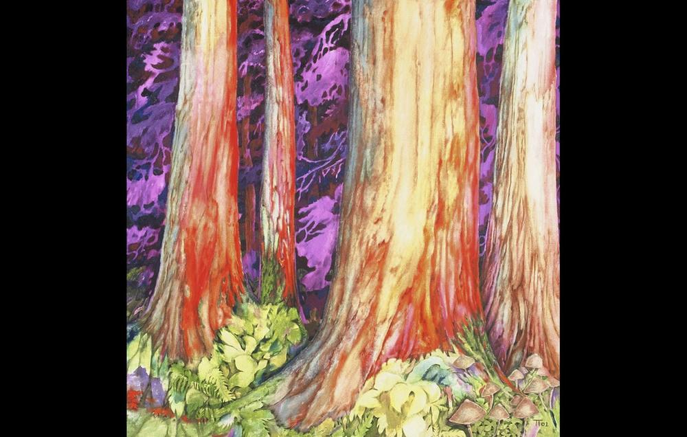 Redwood Forest Nocturne
