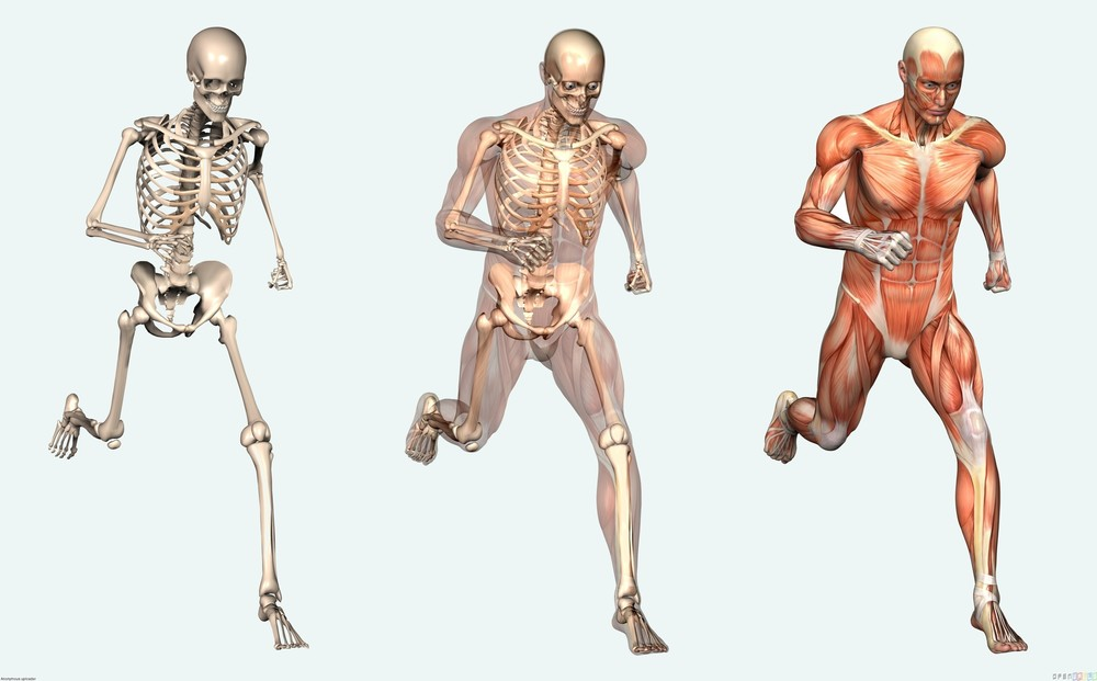 Human Body Systems For Middle School using a system of ethics