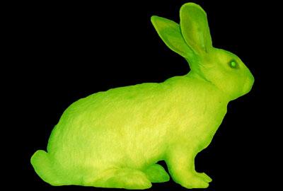 GFP Bunny (2000) Eduardo Kac