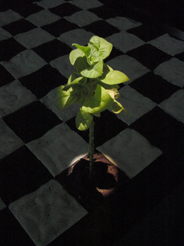 Move 36 (2002-04) Eduardo Kac